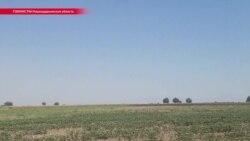 Фермеры в Узбекистане жалуются на побои из-за невыполнения госплана