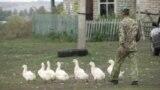 Птичий грипп: поражены уже 4 региона Казахстана
