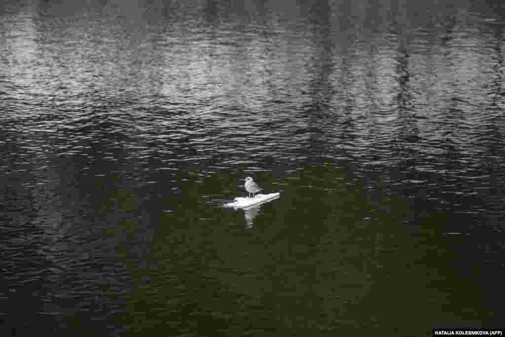 Птица стоит на куске льда на берегу Москвы-реки