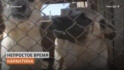 Из-за пандемии приюты для животных в Бурятии оказались на грани закрытия