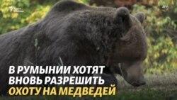Медведи, свиньи и охота в Румынии: спор властей и общества