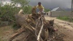 В Ат-Баши сильный ветер повалил дерево, которым придавило пожилую пару