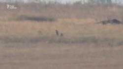 Військові готують запасні позиції поблизу Богданівки – відеорепортаж