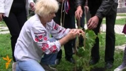 У Києві посадили виноград з Монмартру