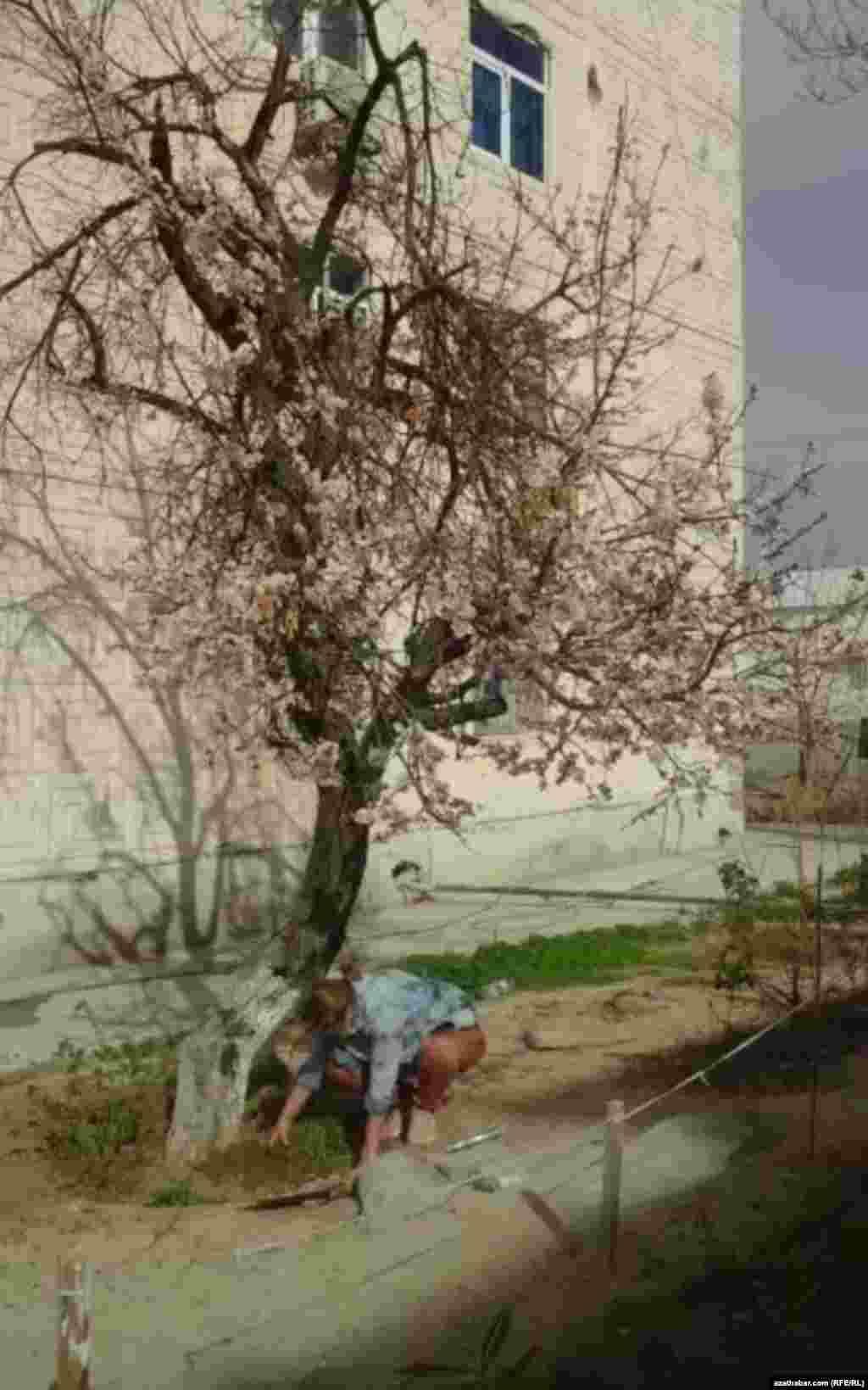 Женщина копает землю. Ашхабад. Март 2021 г.