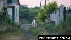 Собака в селе Калачи Акмолинской области. 29 июля 2020 года.