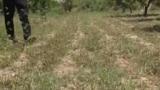 Южный регион Таджикистана атаковала саранча