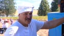 Belarus prezidenti kartof yığır