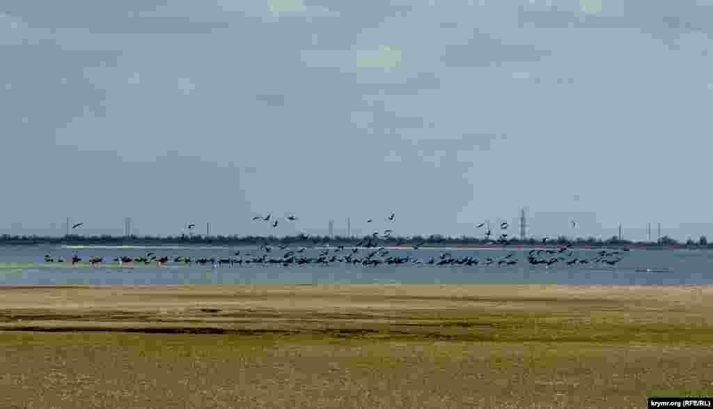 Озеро плануваливикористовувати якставок-охолоджувачдля технічного водопостачання Кримської АЕС. Для цього навколо озера побудували земляну дамбу завдовжки8 кілометрів і завширшки 3-3,5 метрів. Вона оточила все озеро, за винятком північної та північно-східної частин