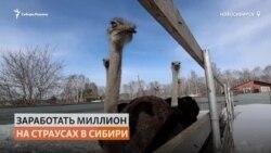 Фермер решил выращивать страусов в Сибири