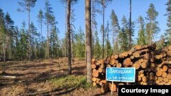 Рубки леса на озере Высокинском