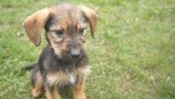 A járvány alatt sokan fogadnak örökbe kutyákat, de gondoljuk át jól a döntést