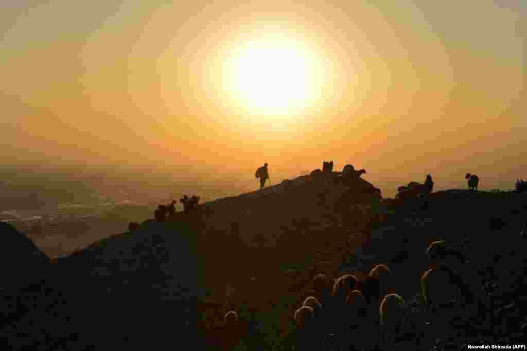 A shepherd leads his herd of sheep and goats on a hilltop during sunset on the outskirts of Jalalabad, Afghanistan. (AFP/Noorullah Shirzada)