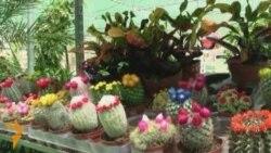 مهرجان الزهور السنوي