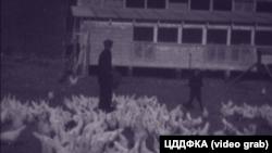 Крим, 1930-і роки, птахофабрика під Сімферополем