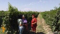 Ազգագրագետ. «Հողերի խոշորացման դեպքում գյուղը կմնա առանց գյուղացու»
