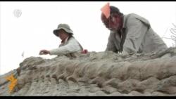 У Мэксыцы знайшлі ўнікальныя парэшткі дыназаўра