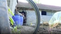 Fermerët e qumështit në hall me vajin e palmës
