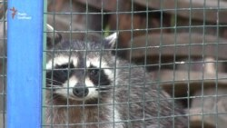 Тварин харківського зоопарку звільнять від ґрат (відео)