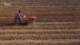 Аравандык дыйкандар картошка тиге баштады