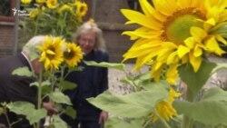 Живі соняшники – в пам'ять про загиблих у «Боїнгу» рейсу MH17 – репортаж із Нідерландів