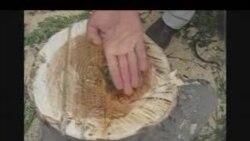 Bir ağacın taleyi