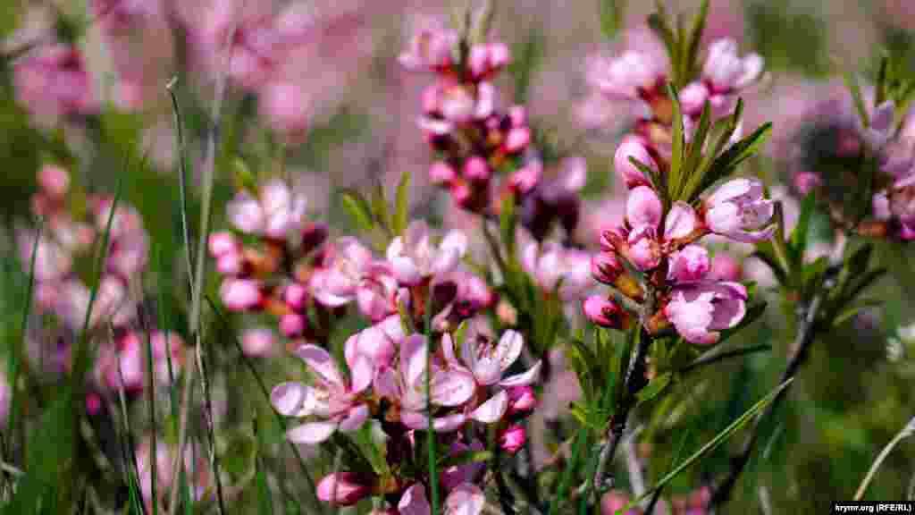 Вовчі ягоди звичайні, що розпускаються поблизу вершини Лялель-Оба. Всі частини рослини містять небезпечні токсини, а зріла ягода є найбільшою загрозою. Всього десять ягід призводять до серйозного отруєння, яке може закінчитися трагічно