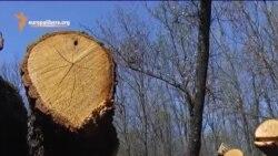 Расхитители лесов