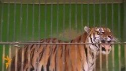 Руски центар во Скопје, мобилна зоолошка во Бишкек