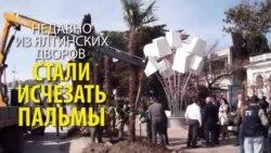 Сбежавшие ялтинские пальмы (видео)