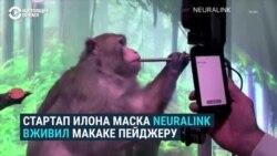 Обезьяна Илона Маска играет в игры силой мысли – при помощи чипа в мозге