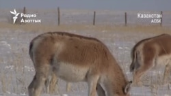 Пандемия и дикие животные: как карантин сказывается на фауне
