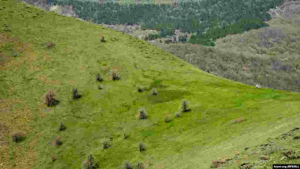 Зелені кола на схилі – місця грибниць гірських білих грибів, стверджують знавці