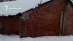 Бродячие псы наводят страх на жителей казанского микрорайона
