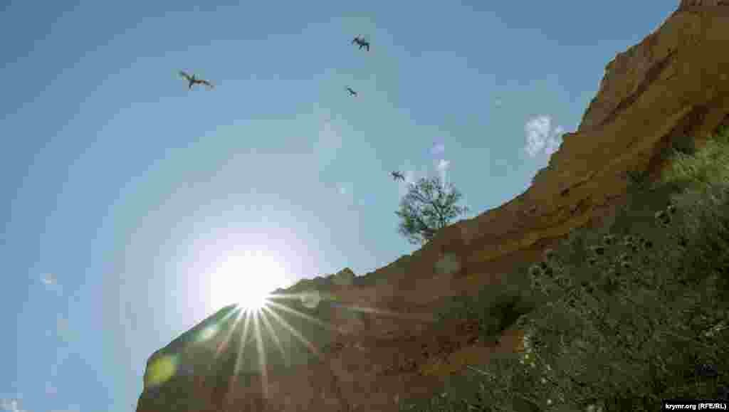 Чайки над кручами Керменчика