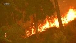 Причиной пожаров в Португалии мог стать поджог