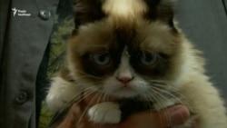 Найпохмуріша кішка, яка стала мемом, померла у віці семи років (відео)