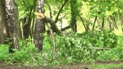 В усадьбе Строгановых вырубают парк