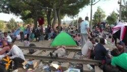 Migrantët në kufirin Maqedoni-Greqi