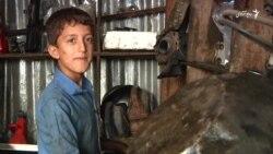 کودکان افغان روز شان را با کار شاقه تجلیل میکنند