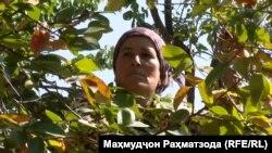 Гулдаста Ғуломова