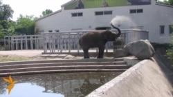 У київському зоопарку заявили, що слоненя Хорас здорове