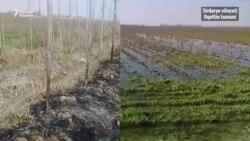 Ҳокимнинг жиянига олиб берилган фермерлар ери қаровсиз қолди