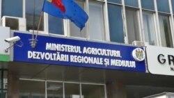 """""""S-a creat o situație artificială pentru a tăia pădurile și a vinde masa lemnoasă."""" Protest al ecologiștilor la Chișinău"""