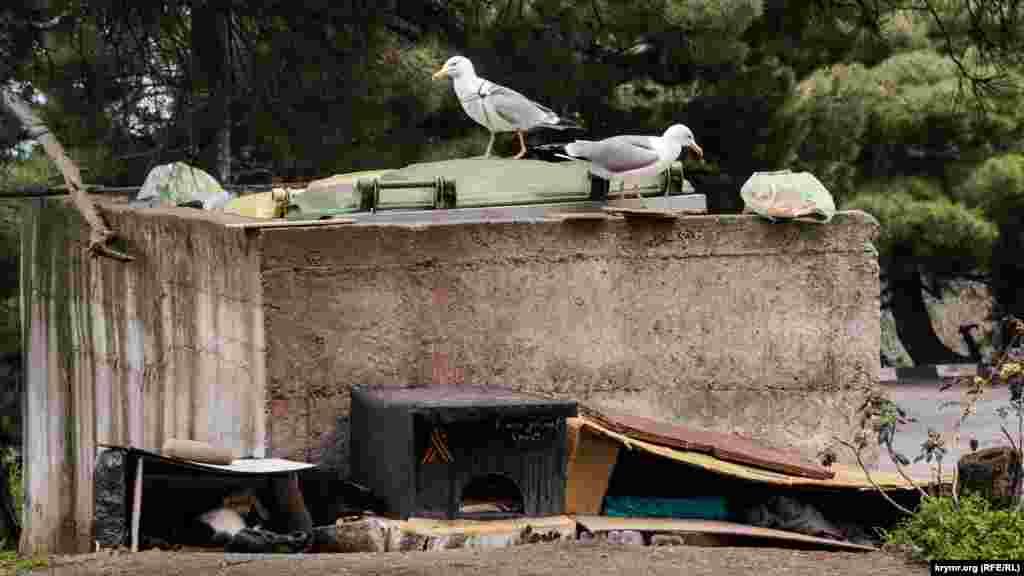 На майданчику зі сміттєвими контейнерами птахи шукають щось їстівне. Під ними, біля бетонної огорожі, – котячі будки, на одній з яких прикріплена георгіївська стрічка і написано «Твори добро»