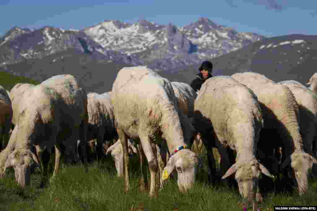 Borjan Balje watches sheep graze in a mountain pasture. The Sharr range stretches 1,600 kilometers from Kosovo and Albania through to North Macedonia.