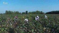 Qırğızıstan pambıqçıya Azərbaycandan çox pul verir