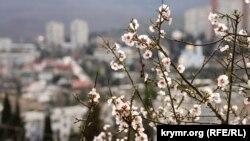 И цветущий миндаль под окном: в Алушту приходит весна (фотогалерея)