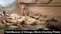 """A diorama once displayed at Chicago's Field Museum depicted canids apparently helping a Neanderthal family corner a wild boar. It was based on a scene from the Mas d'Azil cave in France. But the museum acknowledges its whole Hall of Historical Geology was dismantled because it was """"considered to be scientifically inaccurate."""""""