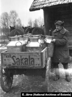 Рабочий колхоза «Сакала» разносит ведра молока в Вильяндиском уезде, 1950 год.